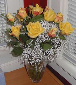 8_04_roses