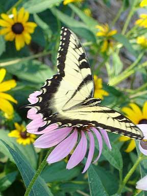 Favorite_garden_visitors