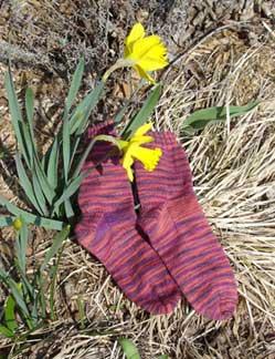 Ll_irving_park_socks