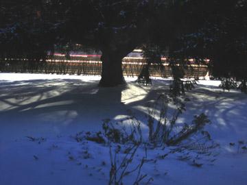 Snow_pic_2